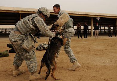A brief history of military working dogs and their role in warfare