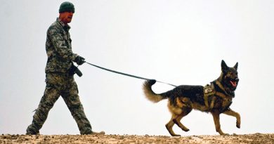 war 390x205 - 3 inspiring and heartwarming stories of military dogs worldwide