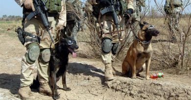 dod 390x205 - 4 canine war heroes and their heartwarming, brave stories