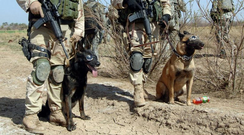 dod 800x445 - 4 canine war heroes and their heartwarming, brave stories