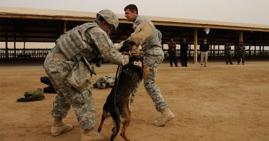 mdogs 390x205 - A brief history of military working dogs and their role in warfare