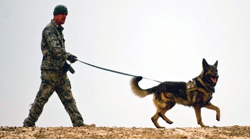 3 inspiring and heartwarming stories of military dogs worldwide